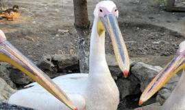 Виктор Жиленко отметил важность популяции птиц во всем мире